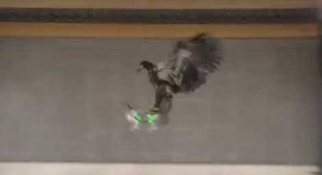 """Guard from above"": Dutch police trains eagles to catch the drones"