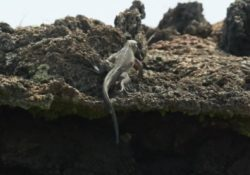 A Run of the Life on Galapagos Islands